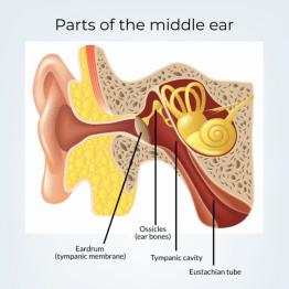 در مورد گوش میانی چه می دانید؟